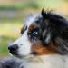 Thumbnail for Deaf Dog Awareness Week